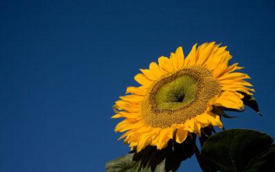 6 conseils pour transformer sa différence en atout